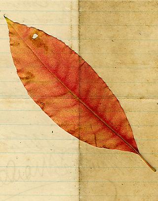 Leaf-on-letter