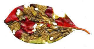 Unusual-leaf