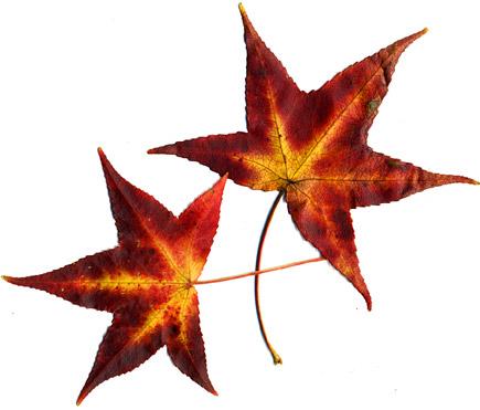 Leaves-2010001