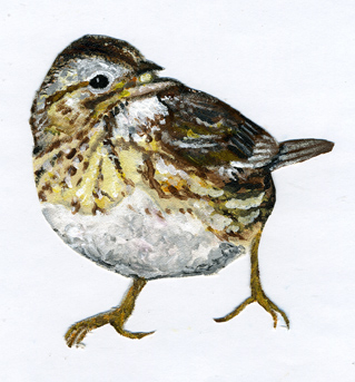 Lincoln-sparrow-painting001