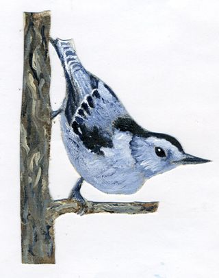 Nuthatch-painting002