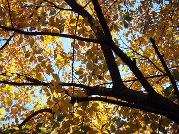 Autumn071