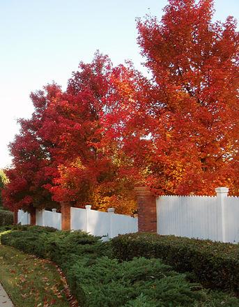 Autumn072